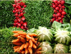 organic summer vegetables