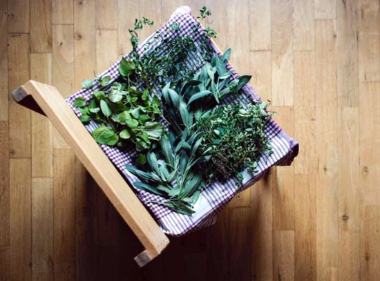 herbs-drying